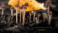 Plastic-eating fungi